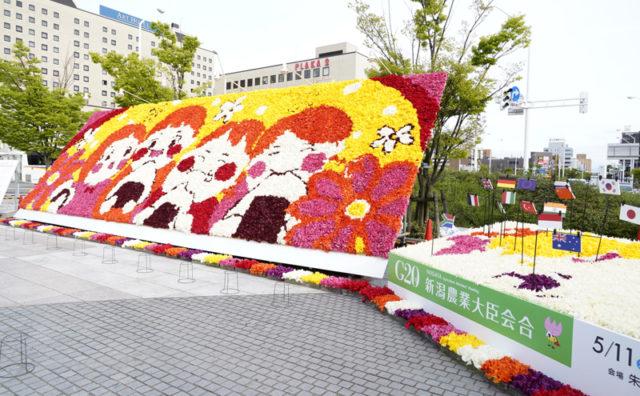 にいがた花絵プロジェクト写真