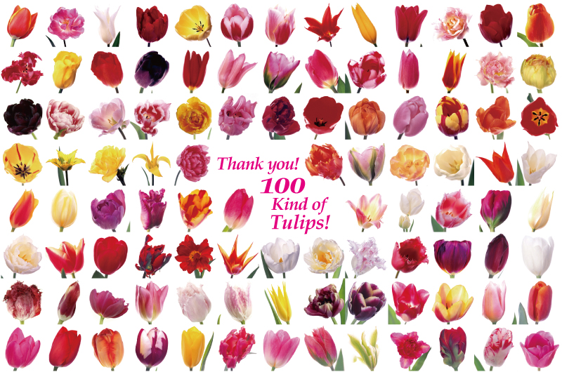 39 for 100 kind of tulips!