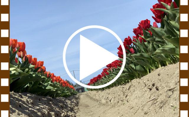 春畑の動画