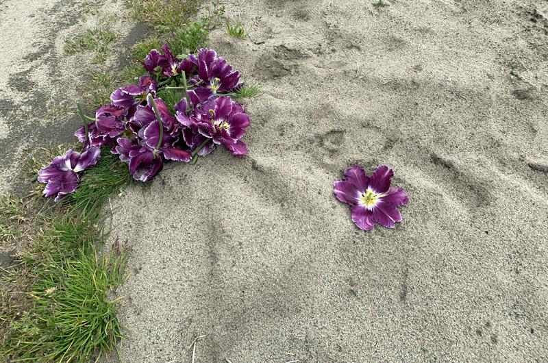 道端に落ちた花
