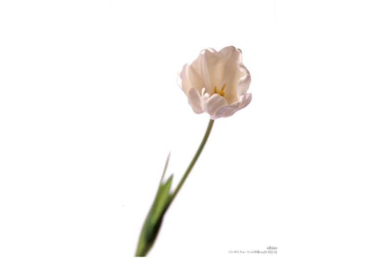 albino-02